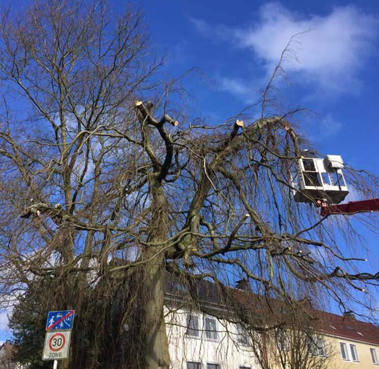 Baumpflege Lüdenscheid